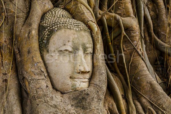 Buda cabeça árvore parede vermelho asiático Foto stock © leungchopan