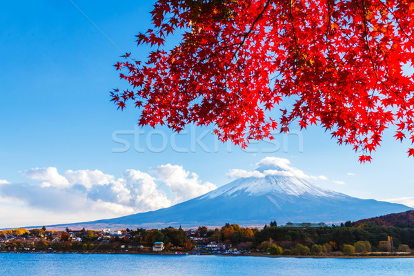 Fuji outono lago rio planta japonês Foto stock © leungchopan