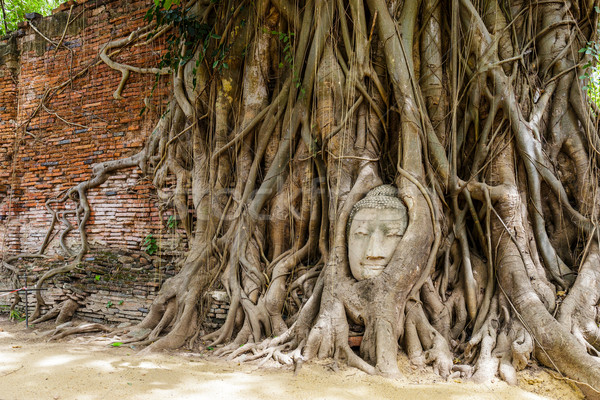 Buddha head in old tree Stock photo © leungchopan