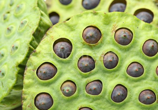Lótusz mag hüvely étel természet gyümölcs Stock fotó © leungchopan