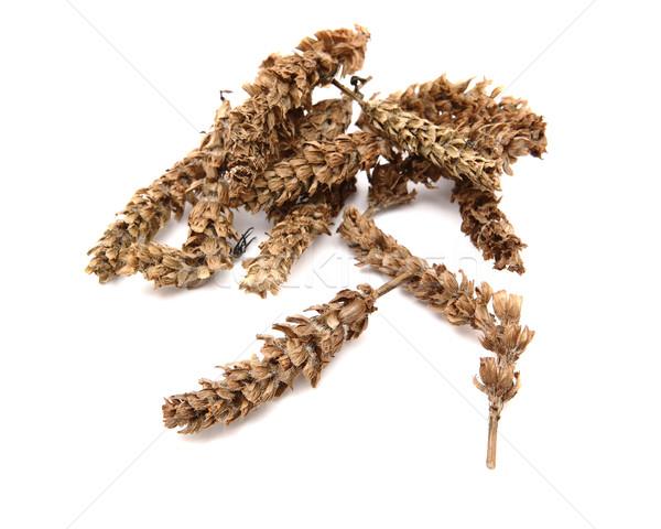 chinese herb, prunella vulgaris Stock photo © leungchopan