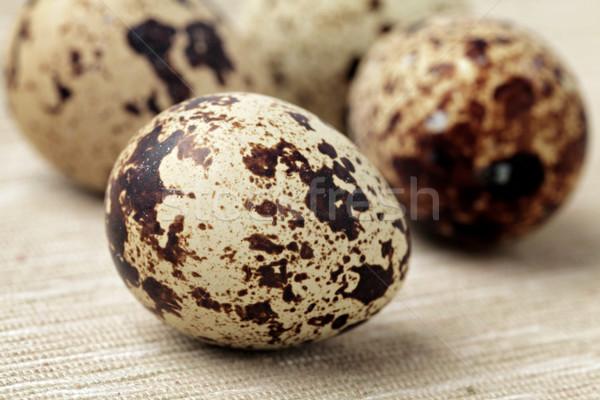 quail eggs Stock photo © leungchopan