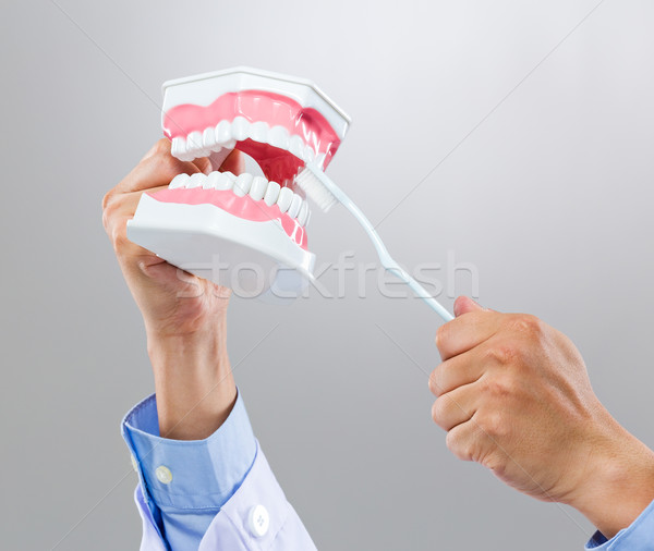 Dentist hold with denture and toothbrush Stock photo © leungchopan
