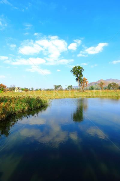 Wetland Stock photo © leungchopan