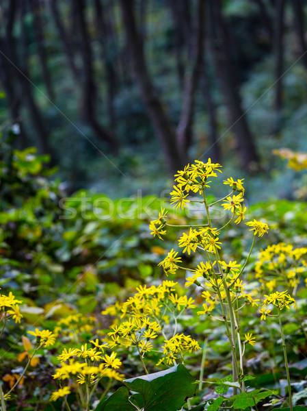 диких цветов лес зеленый завода джунгли тропические Сток-фото © leungchopan
