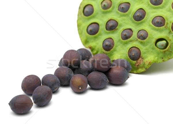 Frescos loto maduro semillas vaina alimentos Foto stock © leungchopan