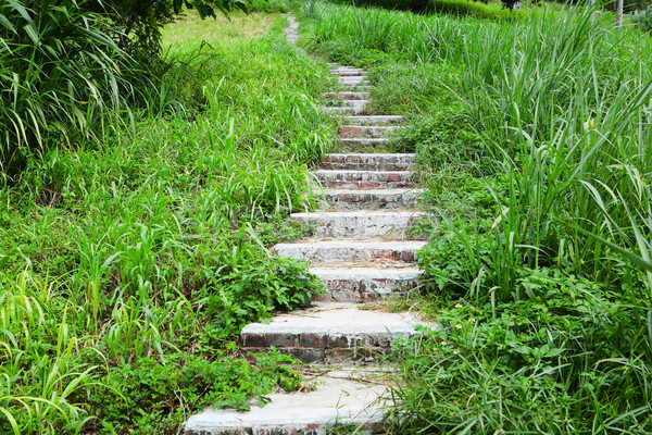 path in country side Stock photo © leungchopan