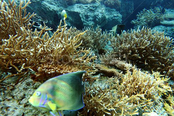 коралловые колония океана путешествия красный пузырьки Сток-фото © leungchopan