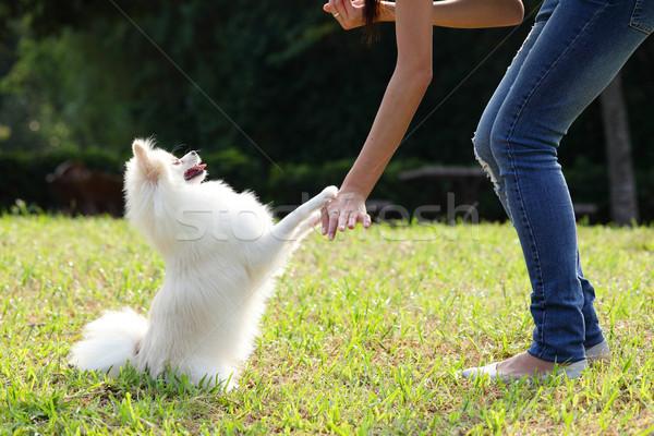 Kobieta pociągu psa niebo charakter lata Zdjęcia stock © leungchopan