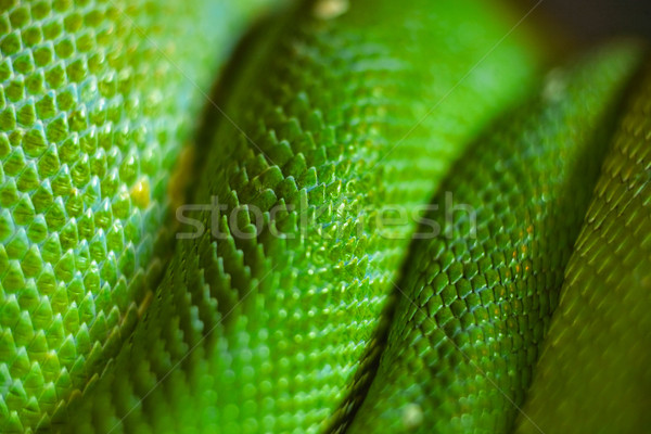 green snake skin Stock photo © leungchopan