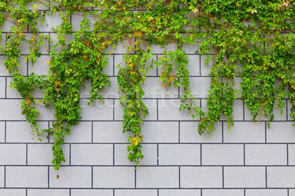 ツタ 緑 工場 レンガの壁 ストックフォト © leungchopan
