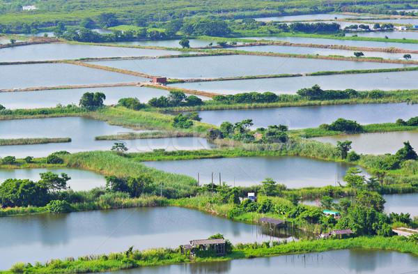 Vis boom bos Blauw rivier vissen Stockfoto © leungchopan