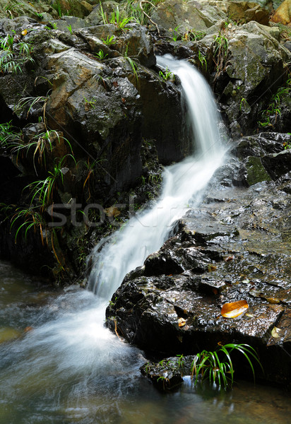 waterfall Stock photo © leungchopan