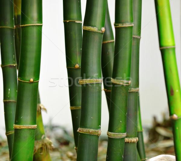бамбук текстуры дерево древесины природы лист Сток-фото © leungchopan