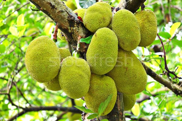 Natureza verde Ásia comer Tailândia Vietnã Foto stock © leungchopan