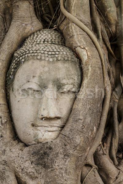 Buddha tête vieux arbre mur rouge Photo stock © leungchopan