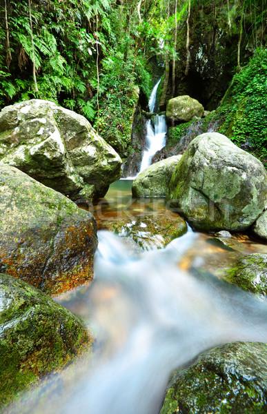 Stock photo: stream in jungle