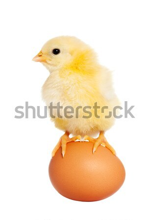 Cute baby eastern animal isolated Stock photo © leventegyori