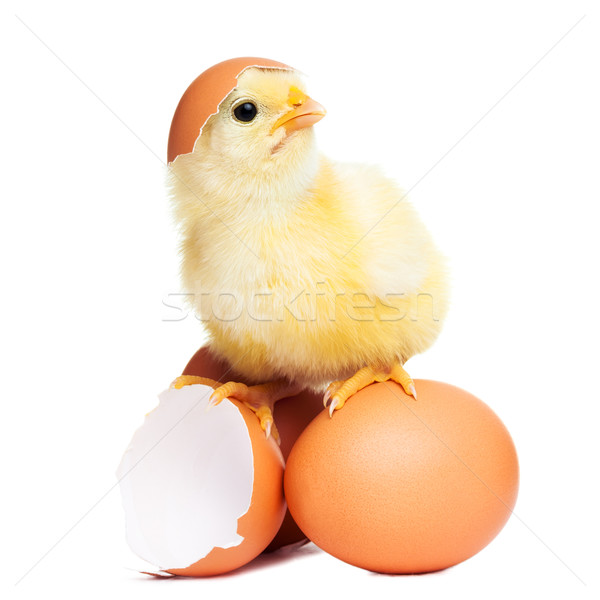 Cute funny easter chick Stock photo © leventegyori