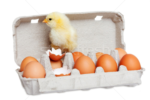 Cute chick with eggs Stock photo © leventegyori