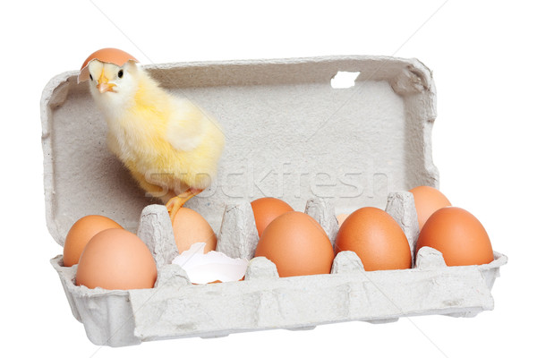 Egg package with cute chick Stock photo © leventegyori