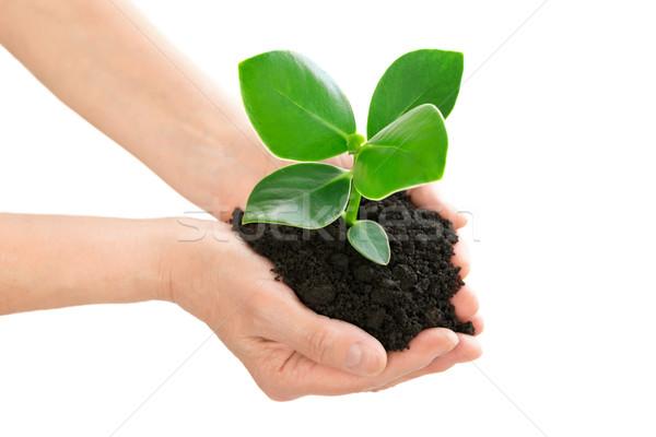 Mani verde impianto ecologia mano Foto d'archivio © leventegyori