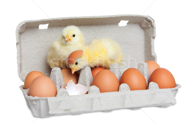 Egg package with cute chicks Stock photo © leventegyori