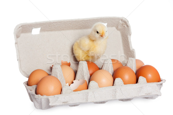Egg package with cute baby chick Stock photo © leventegyori