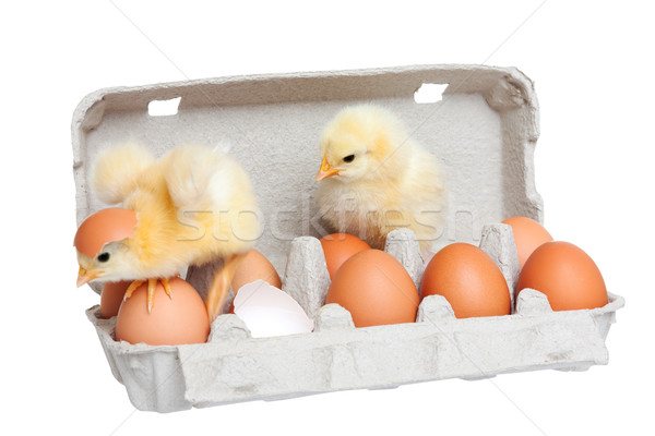 Eggs in the package with cute chick in move Stock photo © leventegyori