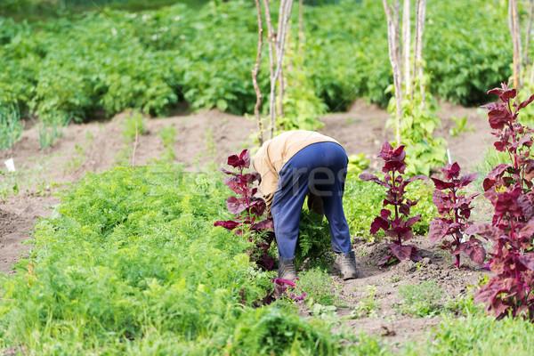 фермер саду человека лист лет зеленый Сток-фото © leventegyori
