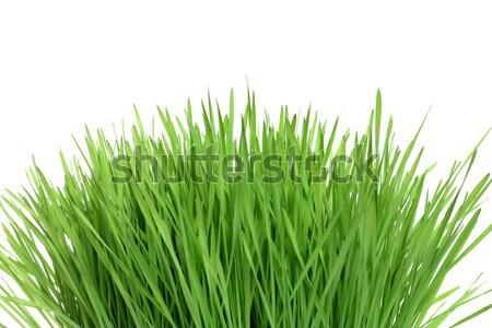 Erba verde isolato erba sfondo estate verde Foto d'archivio © leventegyori