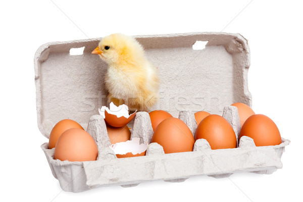 Eggs in the package with cute baby chick Stock photo © leventegyori