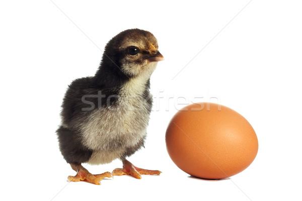 黒 ひよこ 卵 赤ちゃん 鶏 楽しい ストックフォト © leventegyori