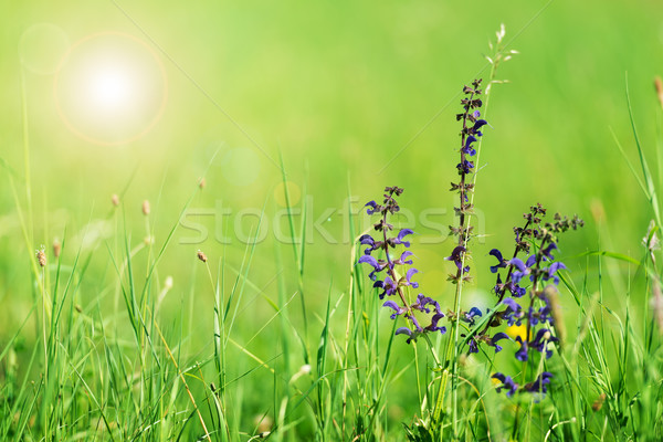 Green summer background Stock photo © leventegyori