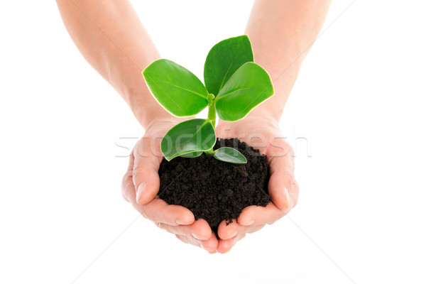 Hand with green plant Stock photo © leventegyori