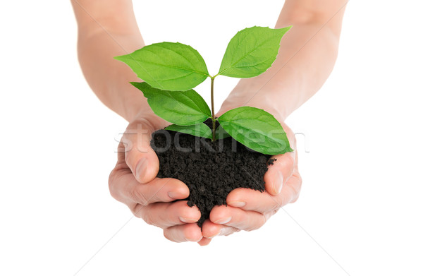 Hands holding green plant new life concept Stock photo © leventegyori
