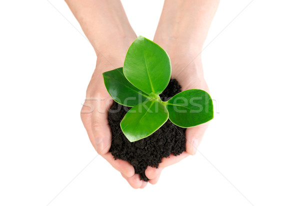 Green plant in hand new life from up Stock photo © leventegyori