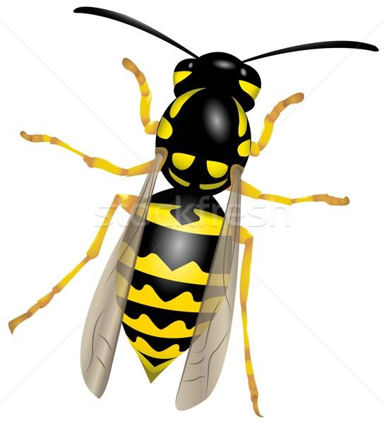 ワスプ 実例 自然 黒 蜂 動物 ストックフォト © Li-Bro