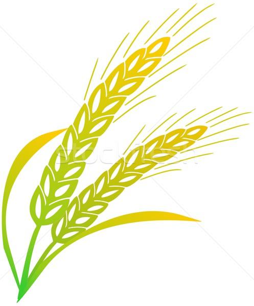 大麦 自然 夏 パン トウモロコシ 農業 ストックフォト © Li-Bro