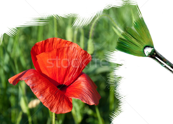 painting poppy flower Stock photo © Li-Bro