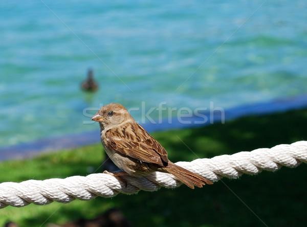 Wróbel kobiet wody ptaków skrzydełka posiedzenia Zdjęcia stock © Li-Bro