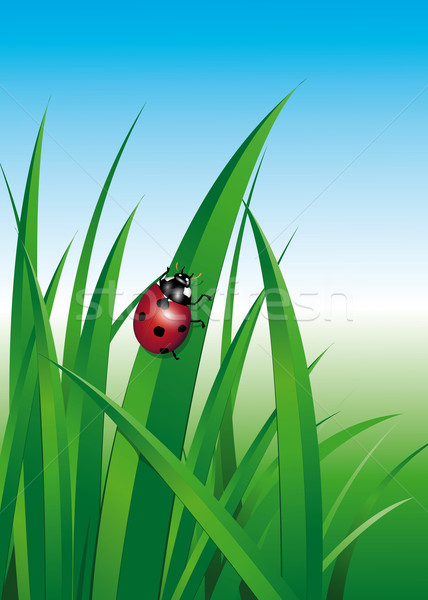 Ladybug Stock photo © Li-Bro