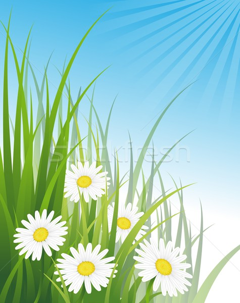 Százszorszépek fű virág természet nyár zöld Stock fotó © Li-Bro