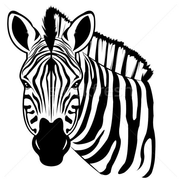 zebra Stock photo © Li-Bro