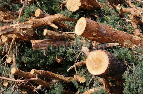 древесины Сток-фото © LianeM