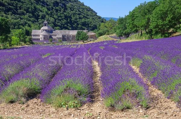 22 kwiat Europie religii lawendy linie Zdjęcia stock © LianeM