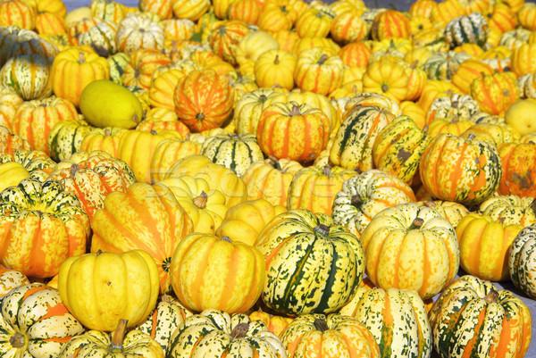 ornamental pumkin 09 Stock photo © LianeM