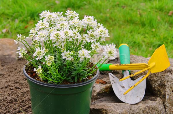 кустарник 20 цветок весны зеленый Сток-фото © LianeM