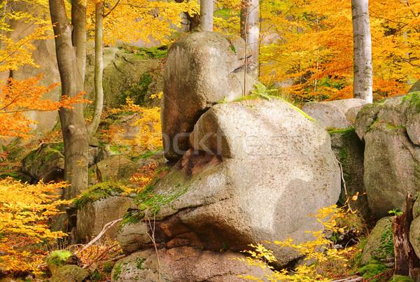 rock in beech forest 02 Stock photo © LianeM