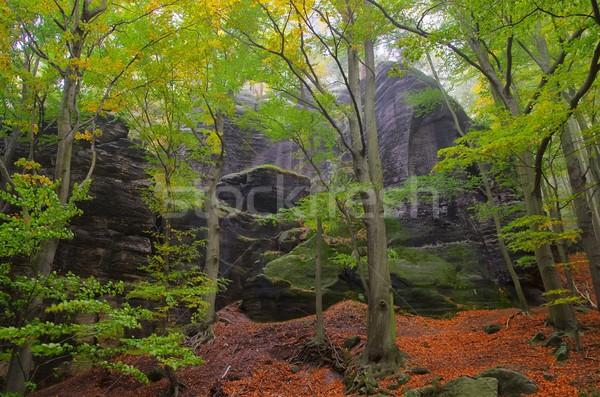 beech forest in fog 04 Stock photo © LianeM